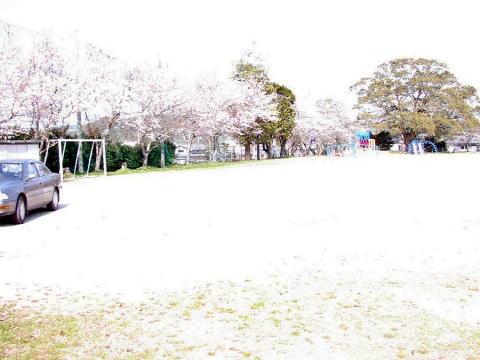Sakura_nagaitosyou_2