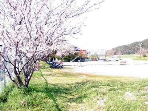 Sakura_nagano_koumin1_2