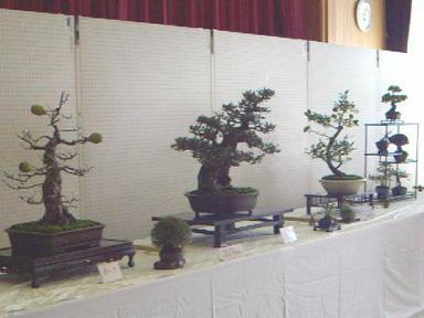 Fureai_bonsai1