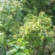2011-05-02-153209-seiko-epson-corp