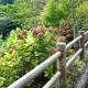 20120915-ajisai-23910_001w600