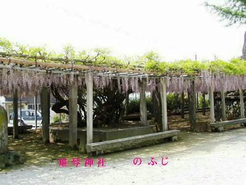 Fuji_kijikoto02
