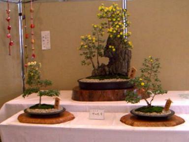 Fureai_bonsai2